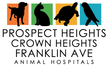 Prospect Heights, Crown Heights and Franklin Ave Animal Hospitals